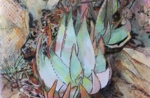Aloes #2